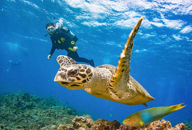 ダイビング中の様子とウミガメ